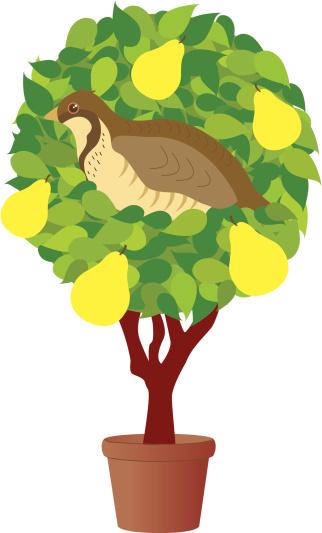Partridge In A Pear Tree Clip Art