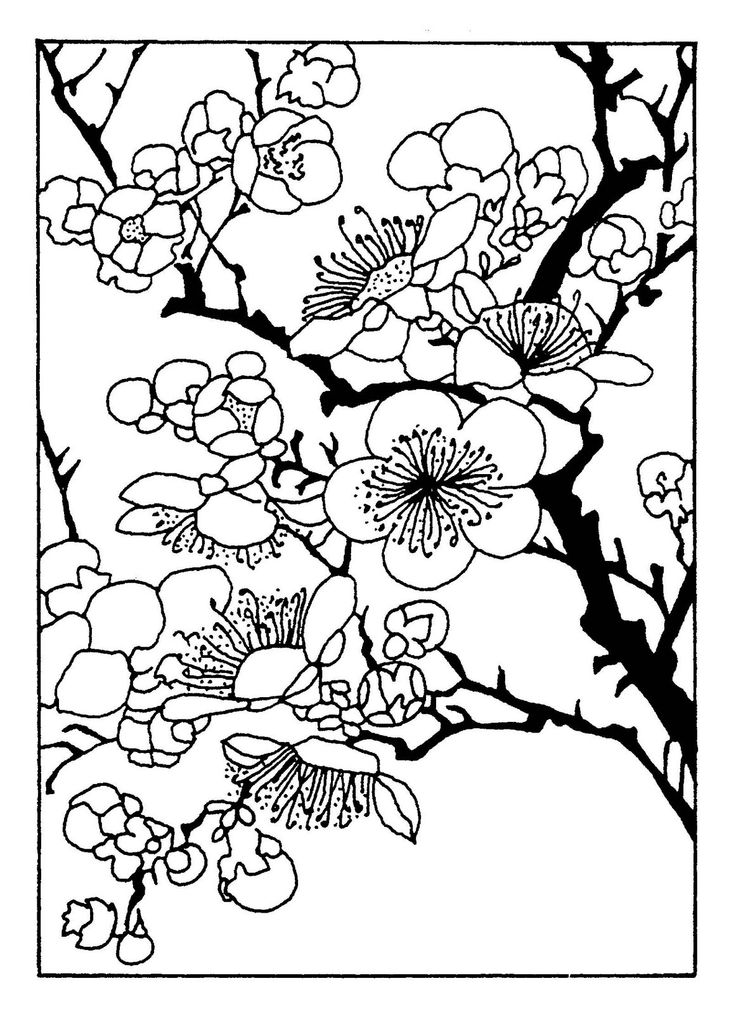 Cherry blossom coloring pages clipart best for Cherry blossom coloring pages