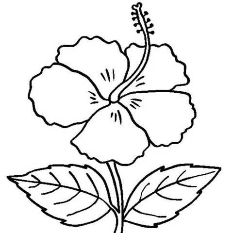 Hibiscus coloring printable clipart best for Hibiscus flower coloring page