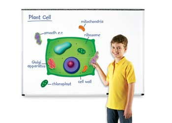 Plant and Animal Cell Essay