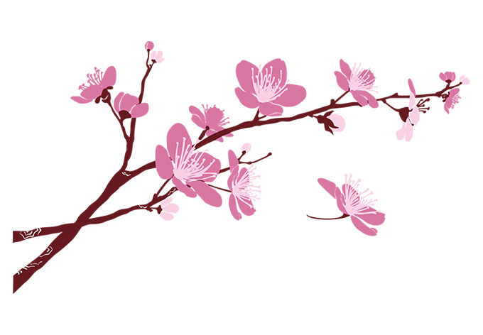 Cherry Blossom Branch Clipart Best