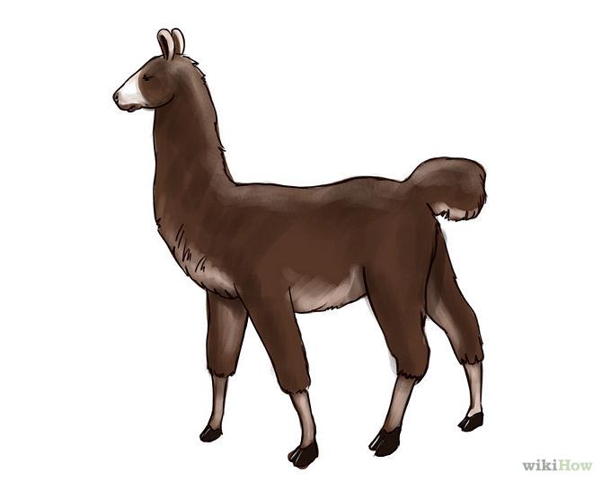 Llama Outline How to draw a llama: 6