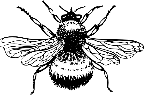 Line Art Bee : Bumblebee drawings clipart best