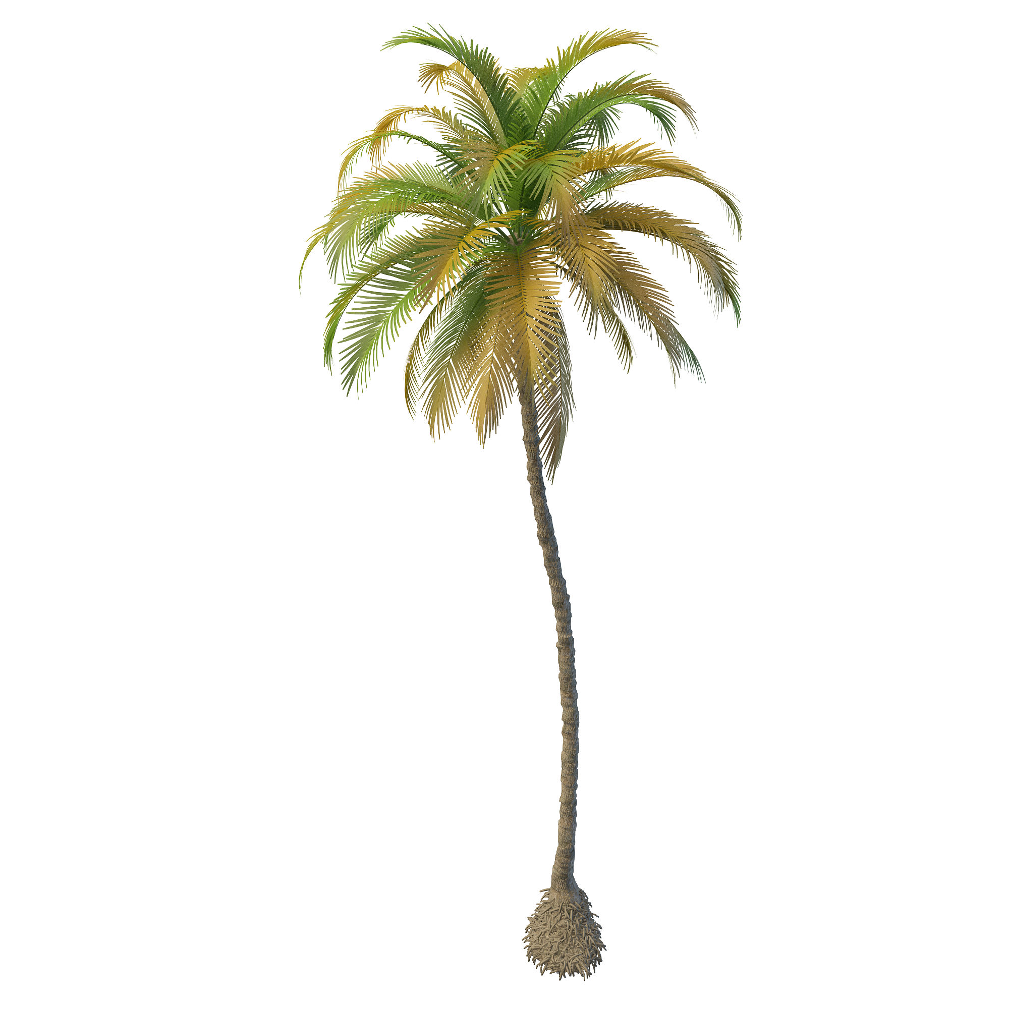 Coconut tree Models- Coconut tree 3d model丨3dxy.us