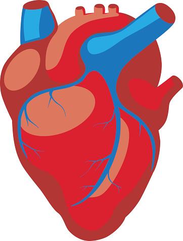 Cartoon Human Heart - ClipArt Best