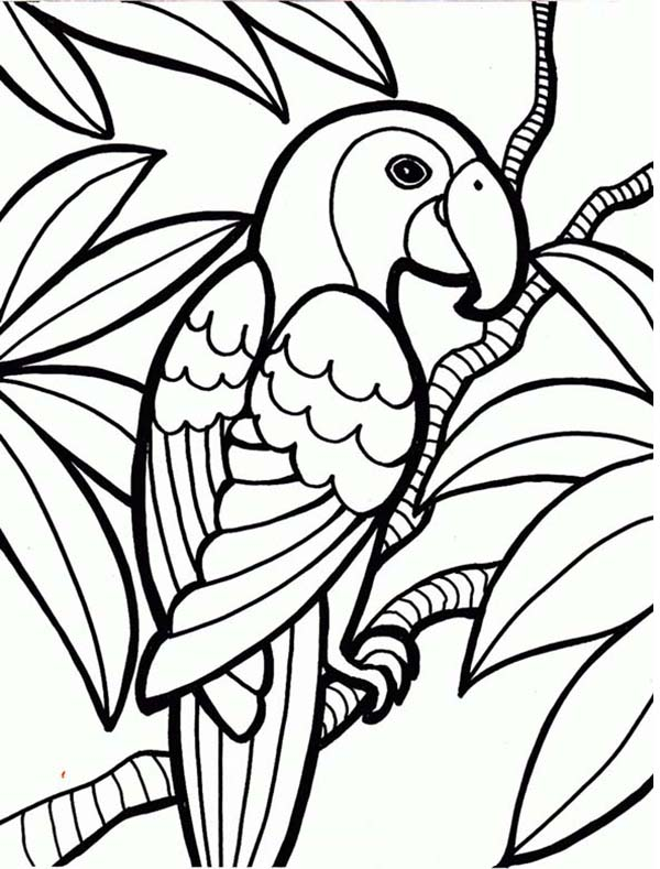 Coloring Pages Plants And Animals : Tropical rainforest flower coloring pages clipart best