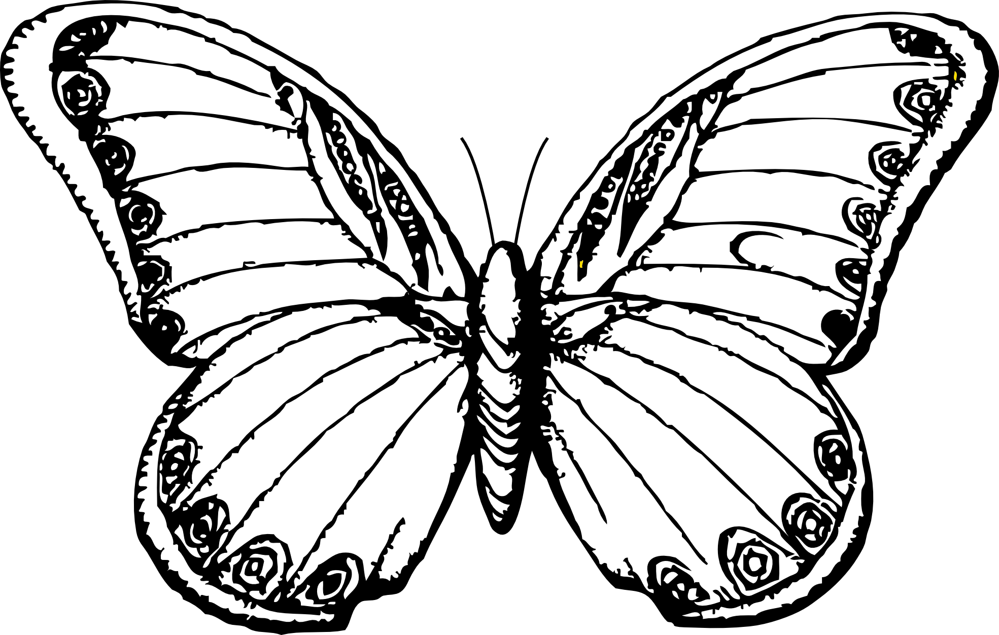 Line Art Free : Line drawings of butterflies clipart best