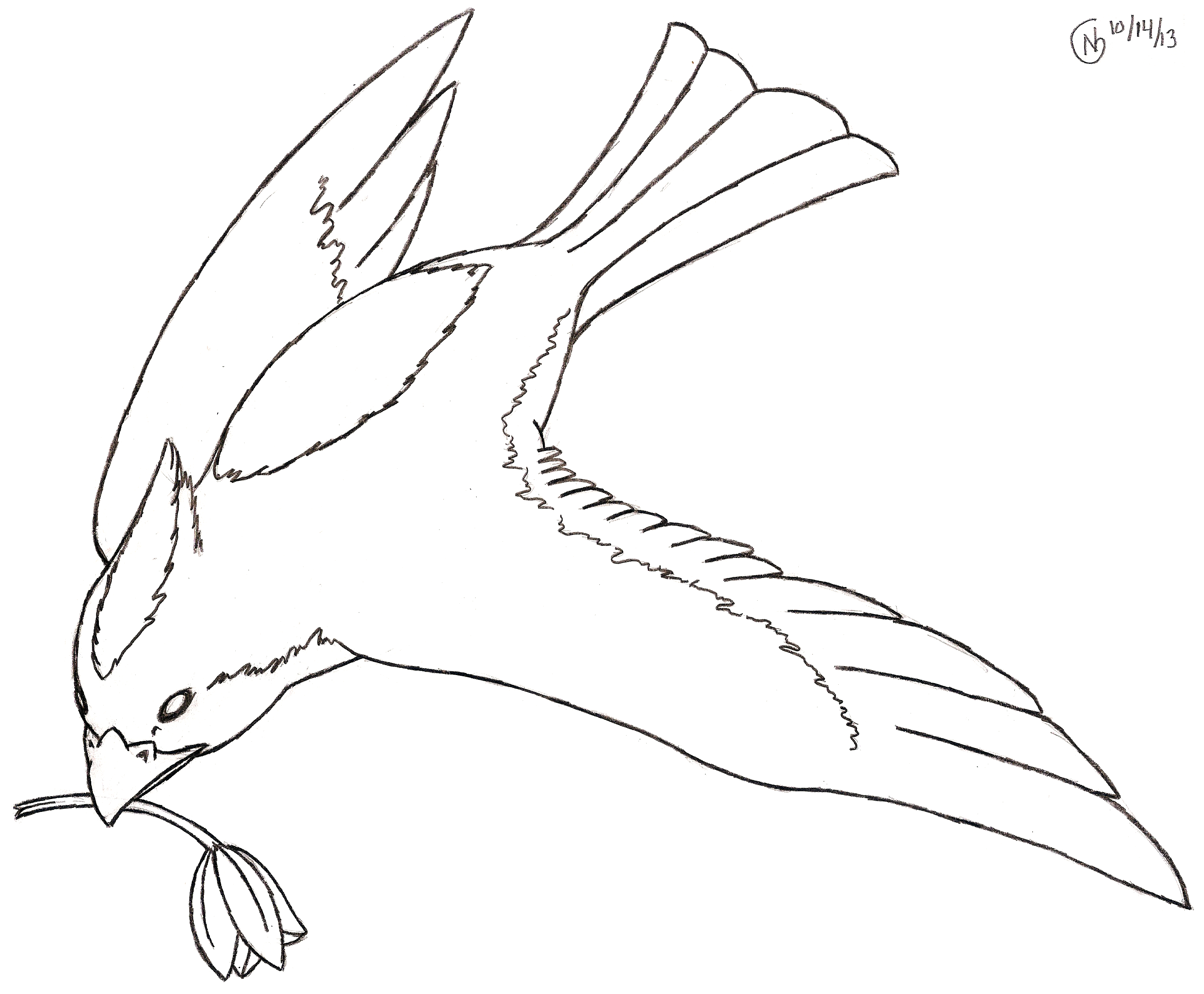 Line Drawings Of Birds In Flight - ClipArt Best