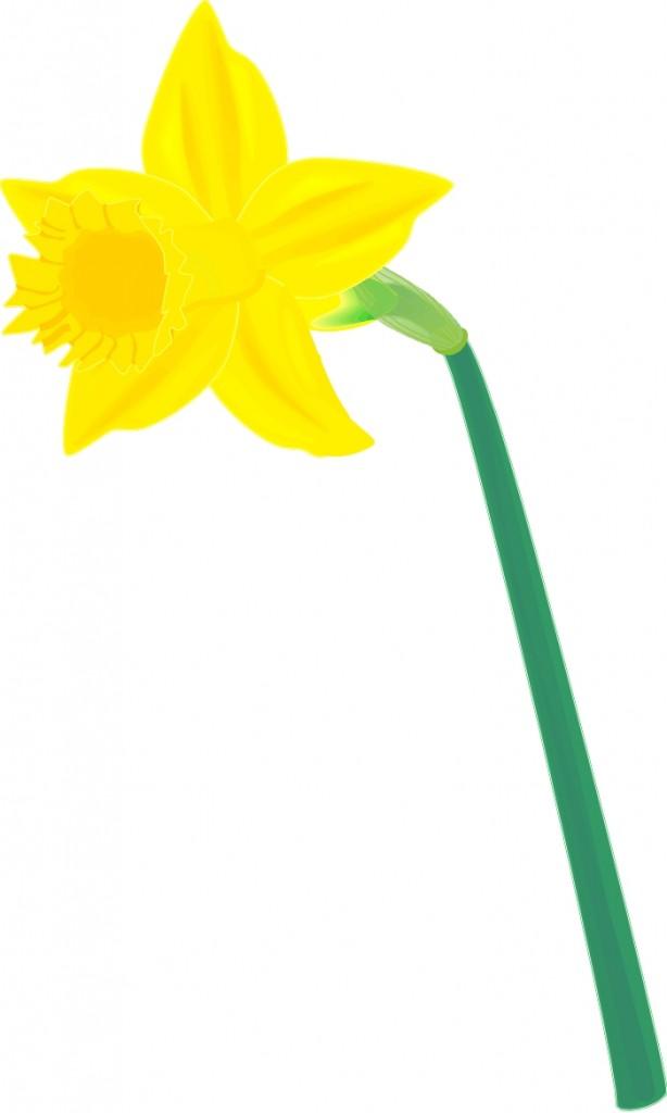 Clip Art Daffodil Clip Art daffodil clip art clipart best free