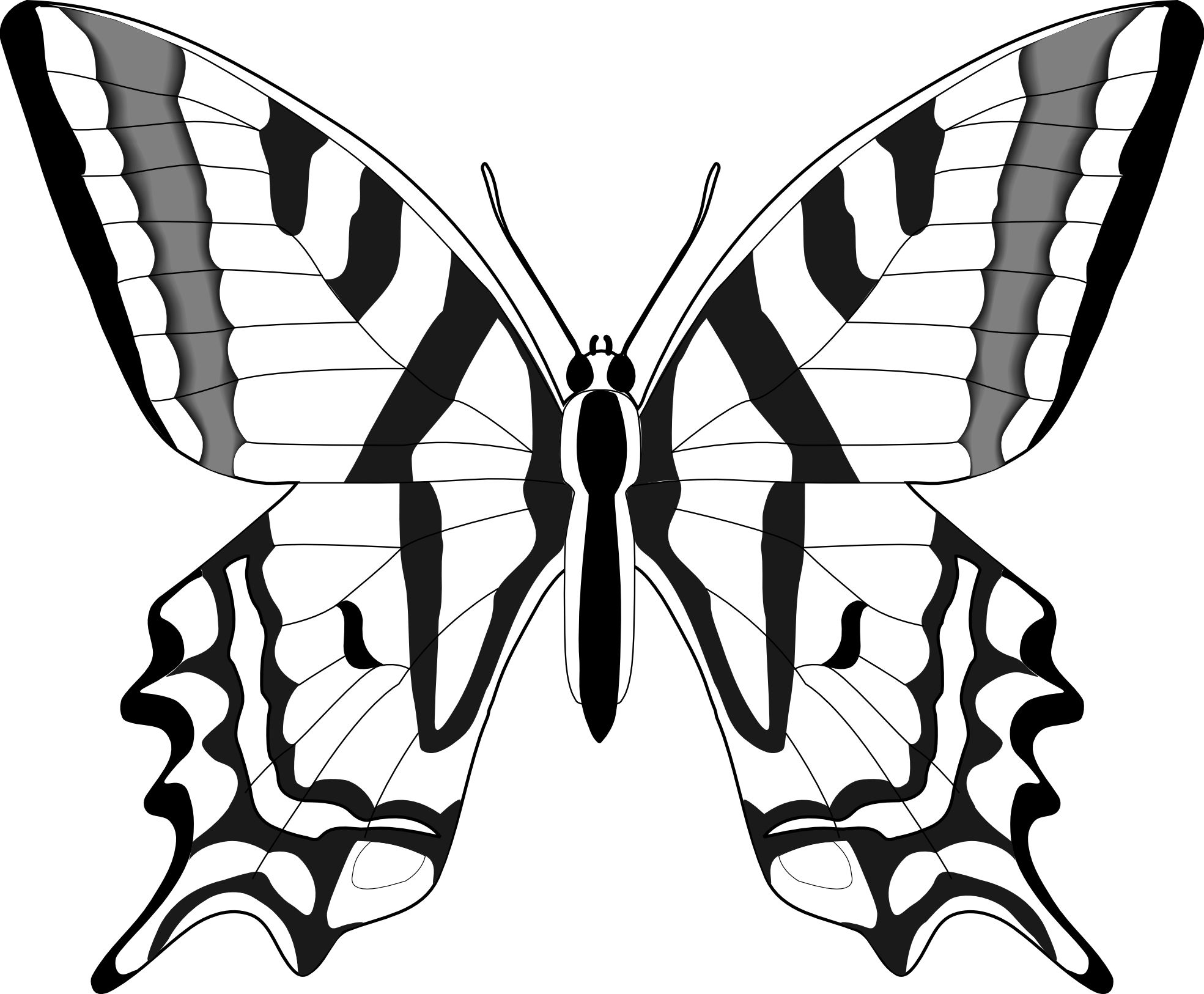 Butterfly Drawings In Black And White - ClipArt Best