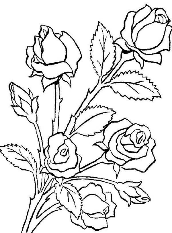 Rose Bouquet Drawing How to Draw a Bouquet of Roses