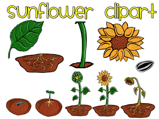 Parts Of A Plant Worksheets - ClipArt Best