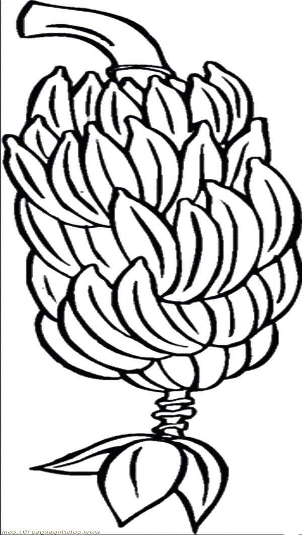 Banana Tree Coloring - ClipArt Best
