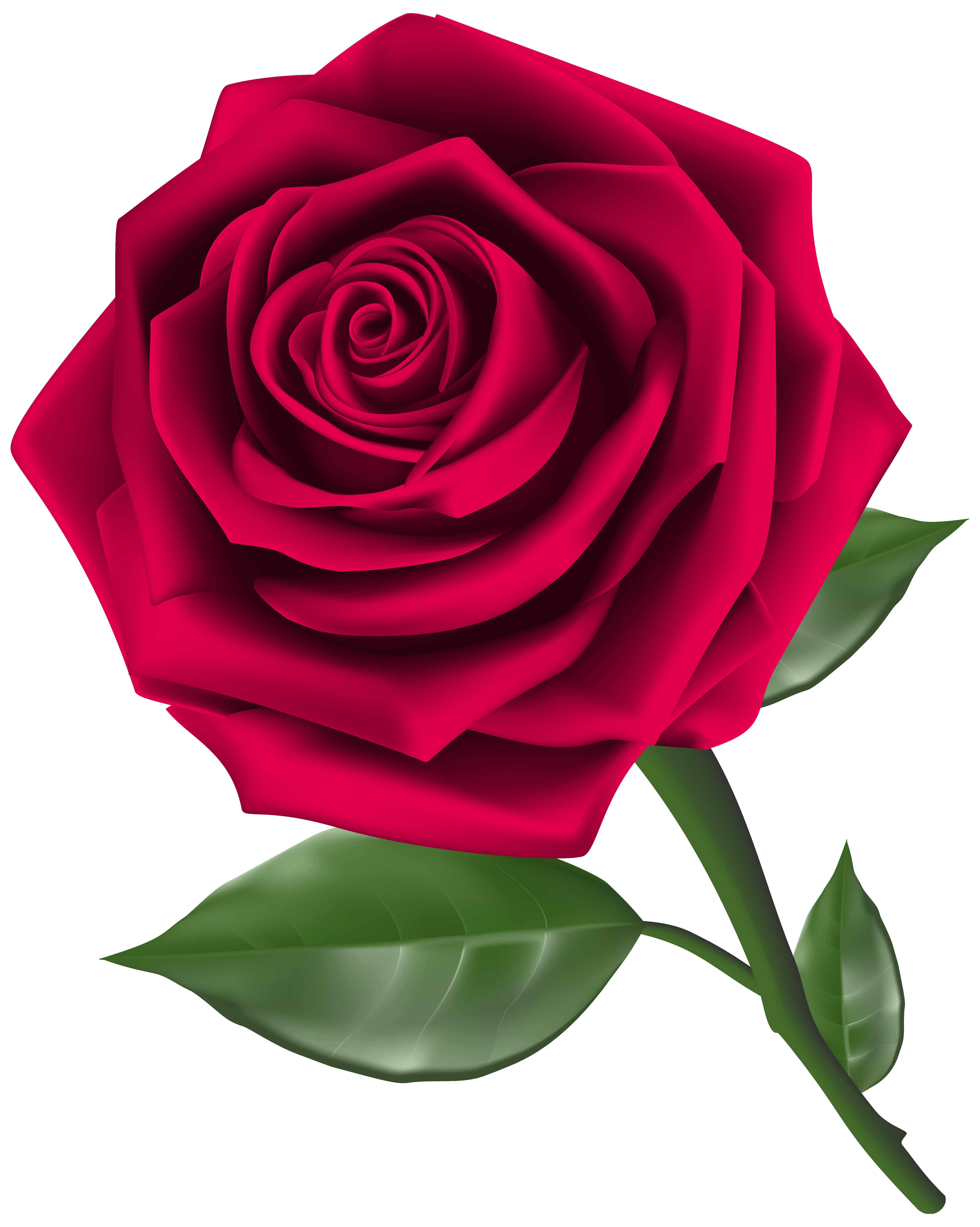 pic rose   clipart best