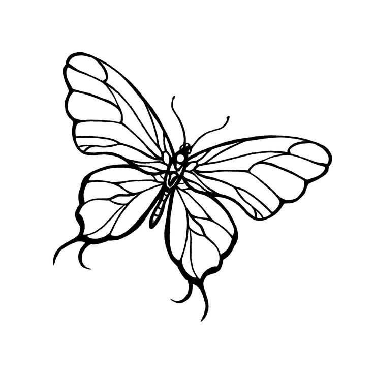 Line Art Butterfly : Line drawing of a butterfly clipart best