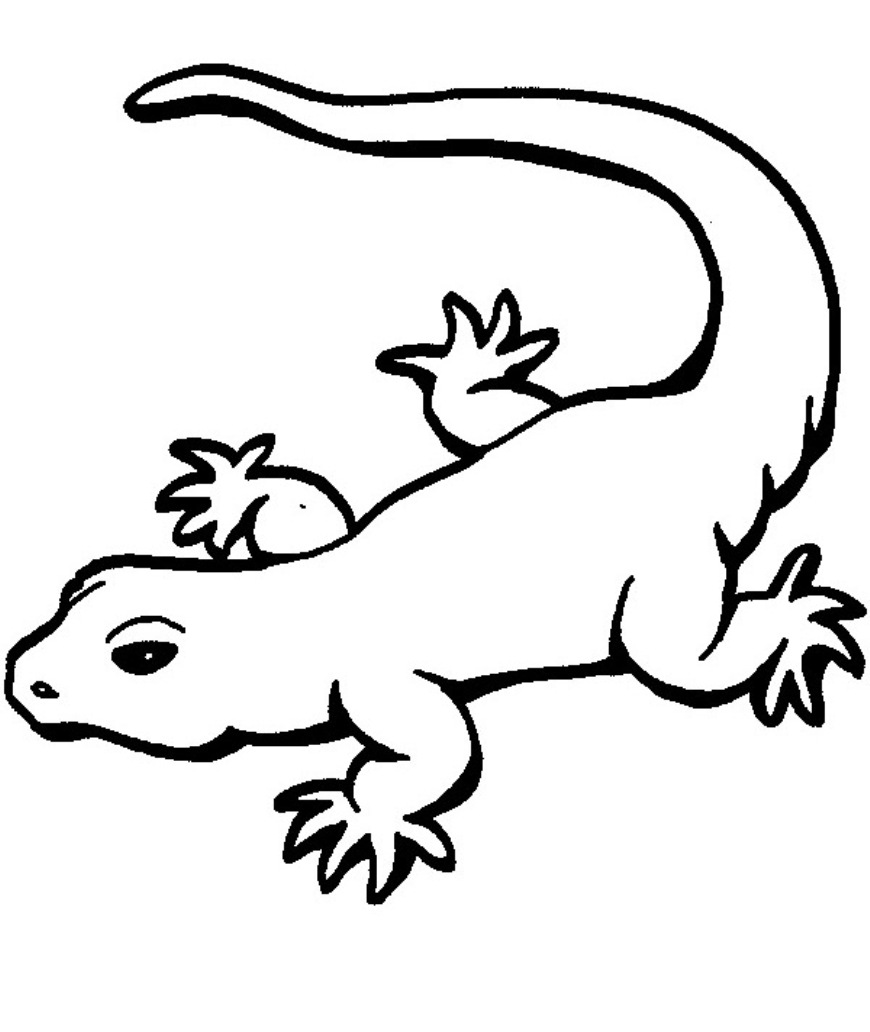 kaboose coloring pages printing gecko - photo #13