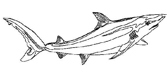 Line Art Shark : Shark line art clipart best