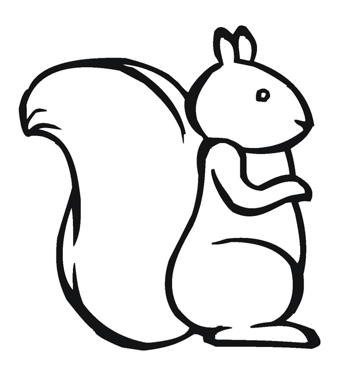 Squirrel templates clipart best for Flying squirrel coloring page