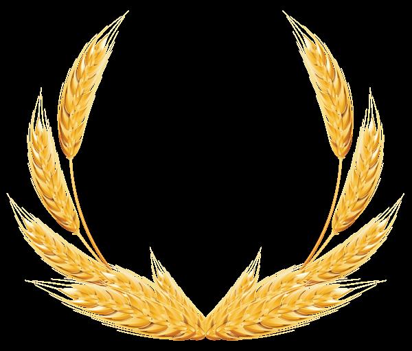 Wheat clipart best for Transparent top design