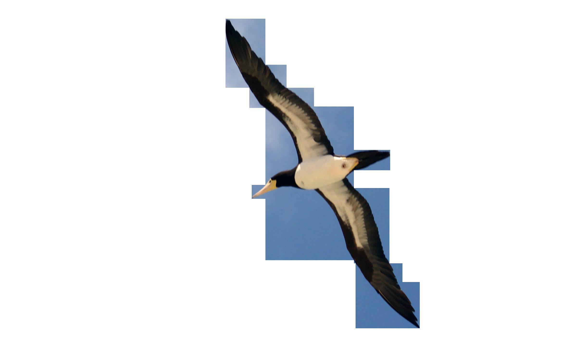 The Aviator Bird Harness  The Parrot University llc