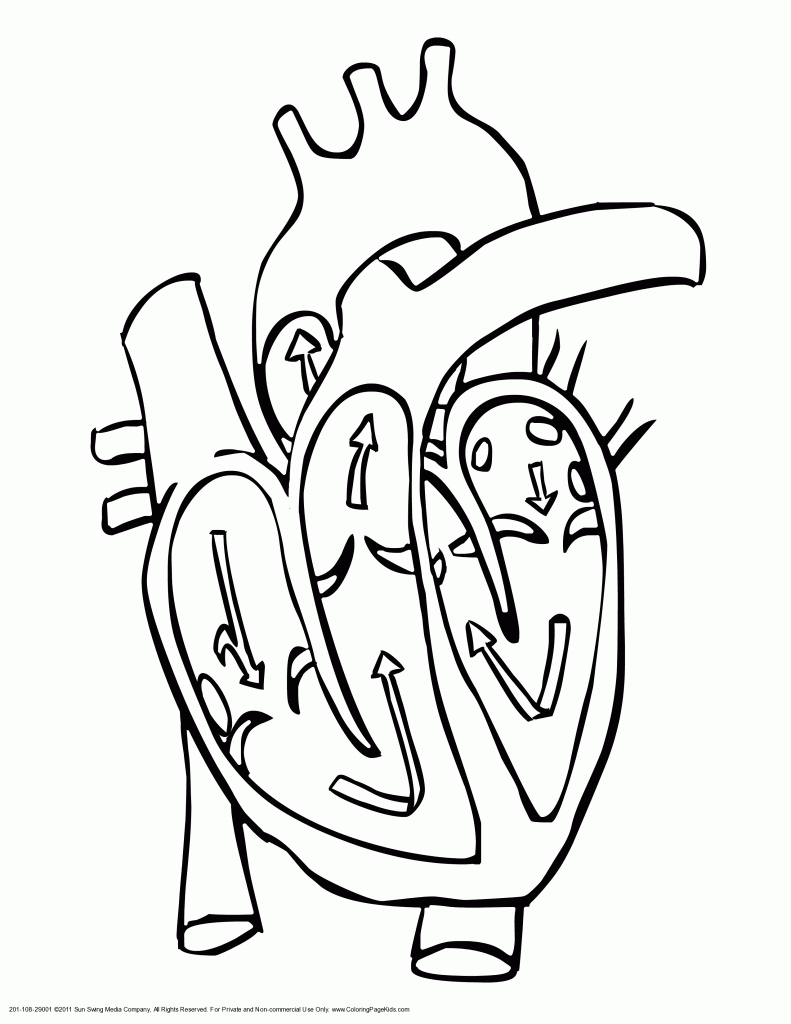 Black And White Heart Diagram Unlabeled - ClipArt Best