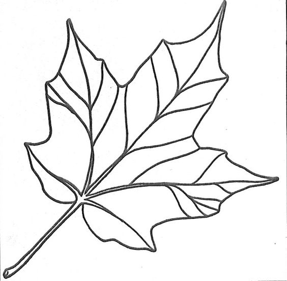Line Drawing Leaf : Line drawings of leaves clipart best