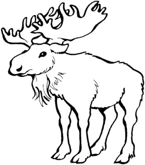 Hungry Moose Eating Grass Coloring Page Free Printable 18993 ...