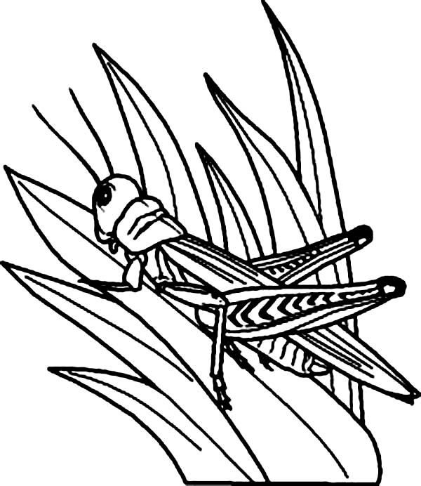 grass coloring pages - photo#24