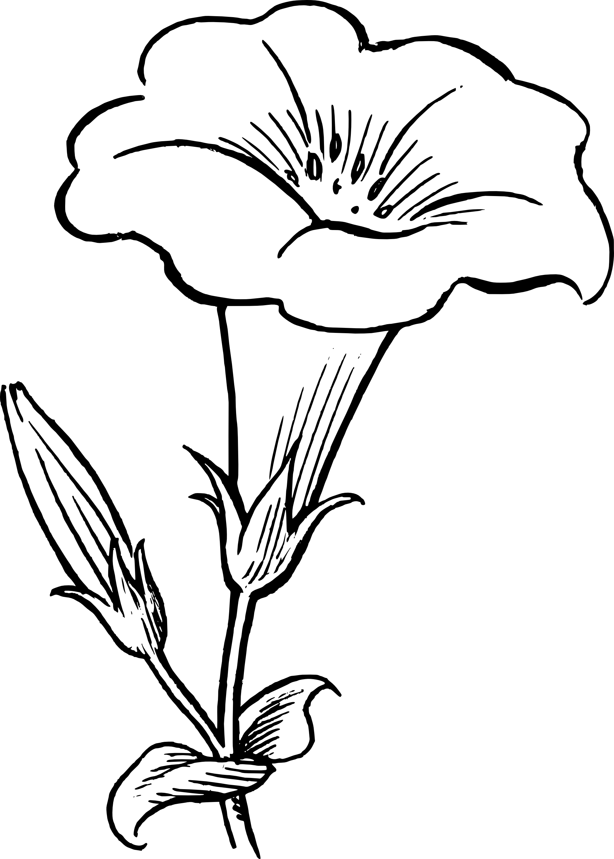 Line Art Flower Drawing : Flower line drawings free clipart best