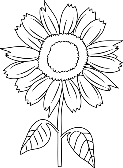 sunflower black and white drawing sunflower black and white