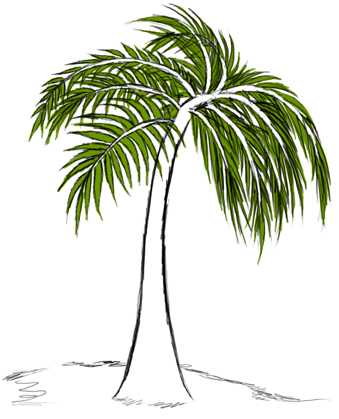 Palm Tree Drawing Clipart Best