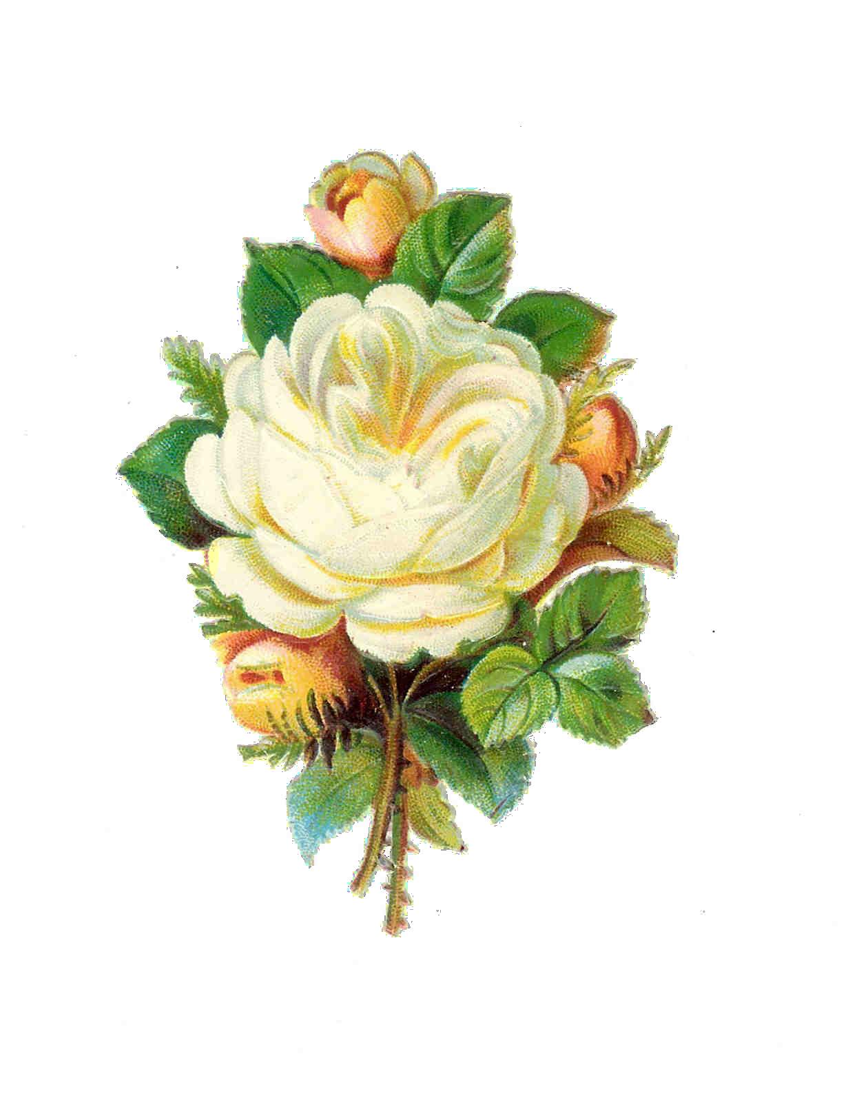 Vintage Flower Png - C...