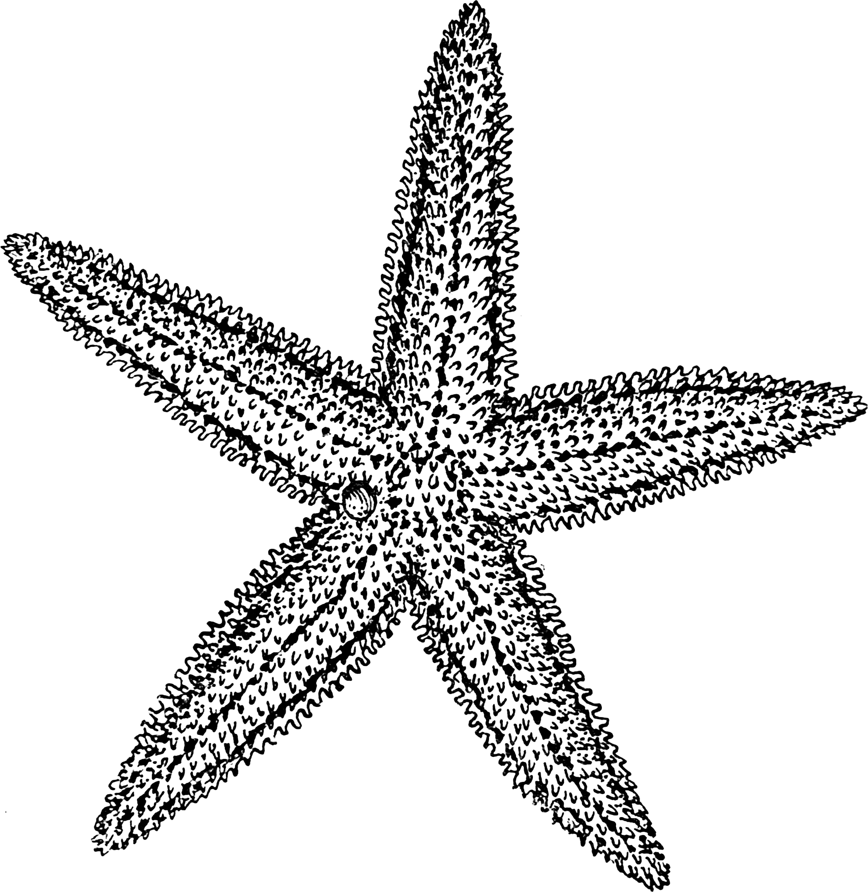 Starfish Outline Png Starfish Outline Clip Art
