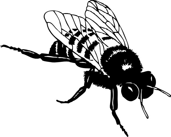 Honey Bee Clipart Black And White - ClipArt Best