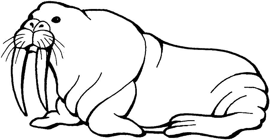 walrus.jpg - ClipArt Best - ClipArt Best