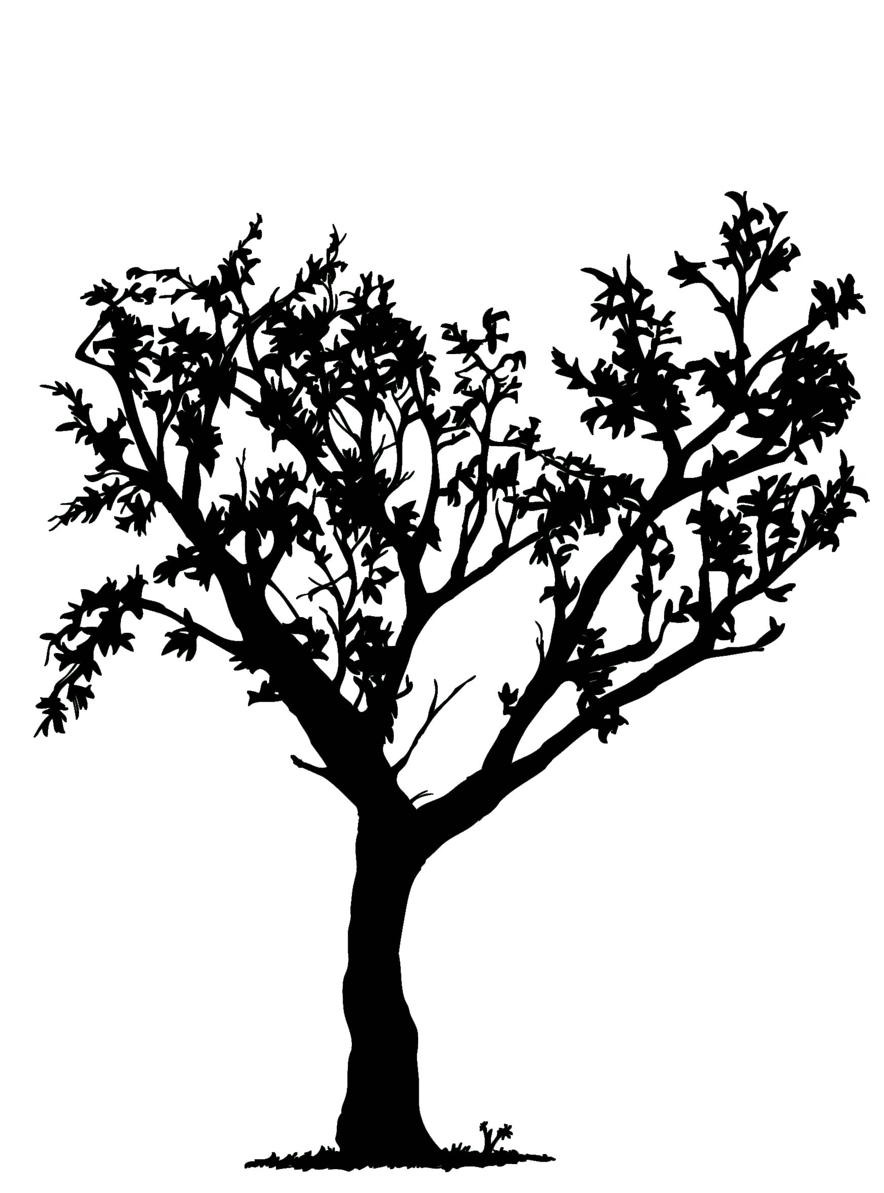 Drawing black and white tree clipart best for Best tree drawing
