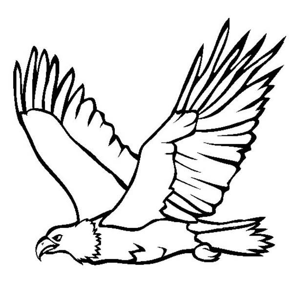 eagle coloring pages for kids - photo #28