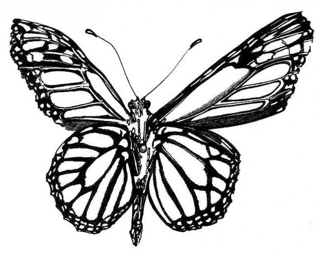 Black And White Drawings Of Butterflies