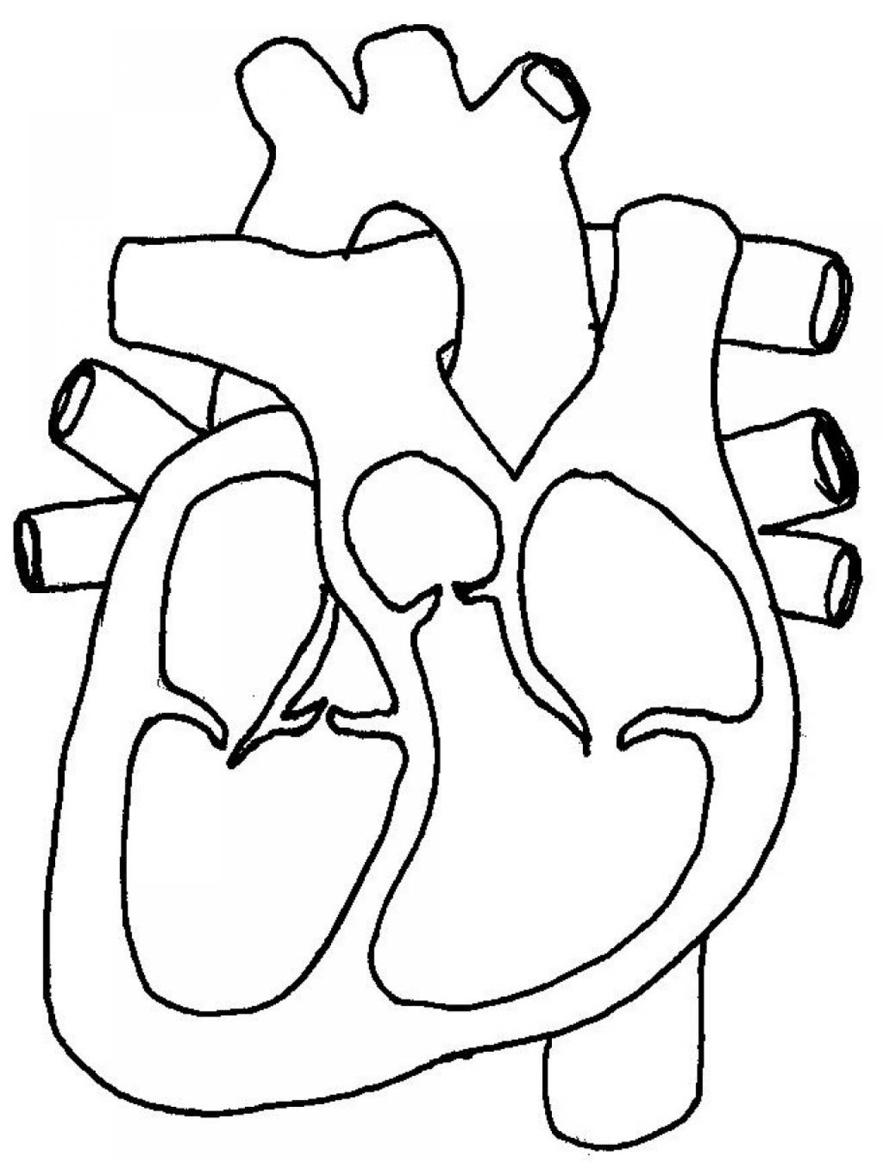 Blank Diagram Of The Heart - ClipArt Best
