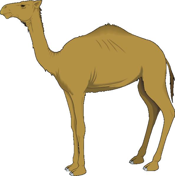 Camel Cartoon - ClipArt Best
