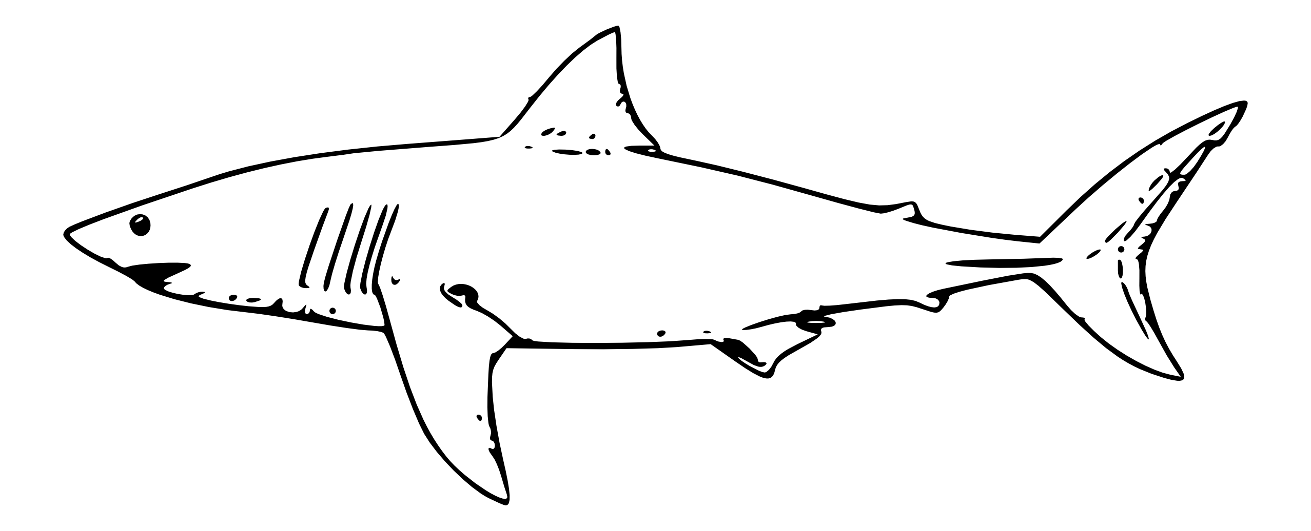 Line Drawing Shark : Shark line art clipart best
