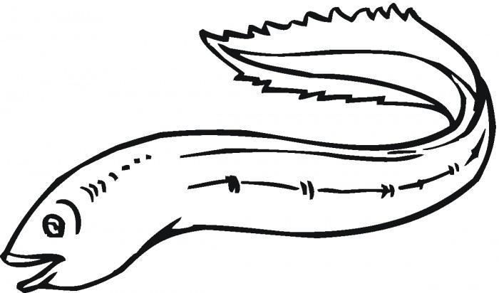 eel coloring page - cartoon eel clipart best