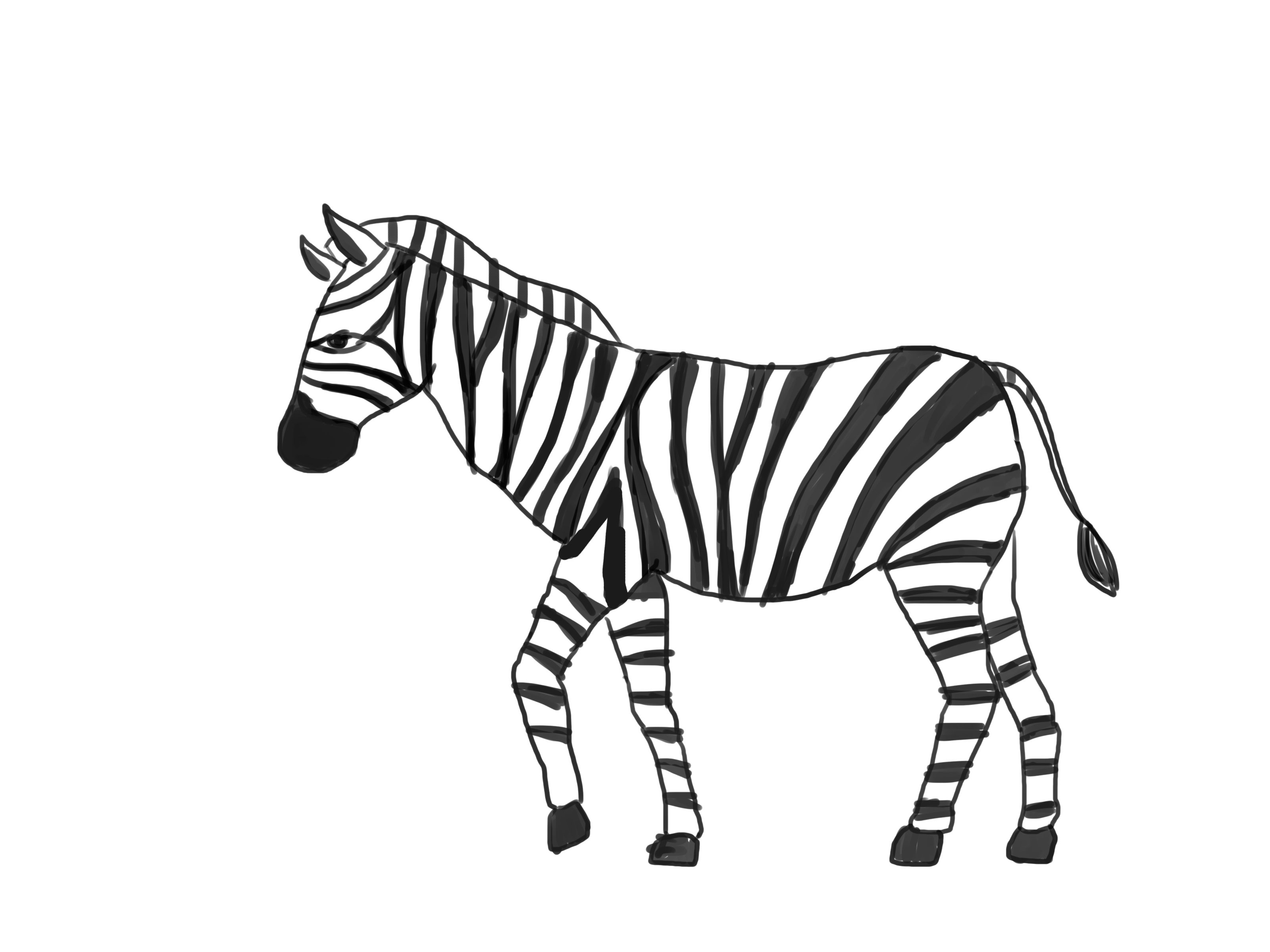 Line Drawing Zebra : Zebra line drawing clipart best