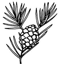 free pine cone clip art clipart best