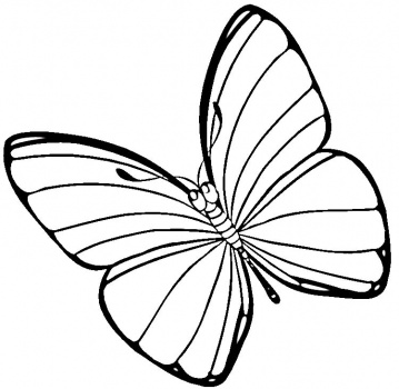 How To Draw Easter Butterflies ClipArt Best