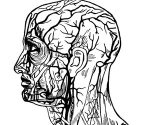Human Biology Clipart | College