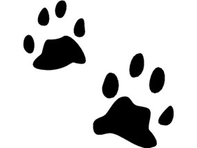 Animal Tracks Clip Art - ClipArt Best