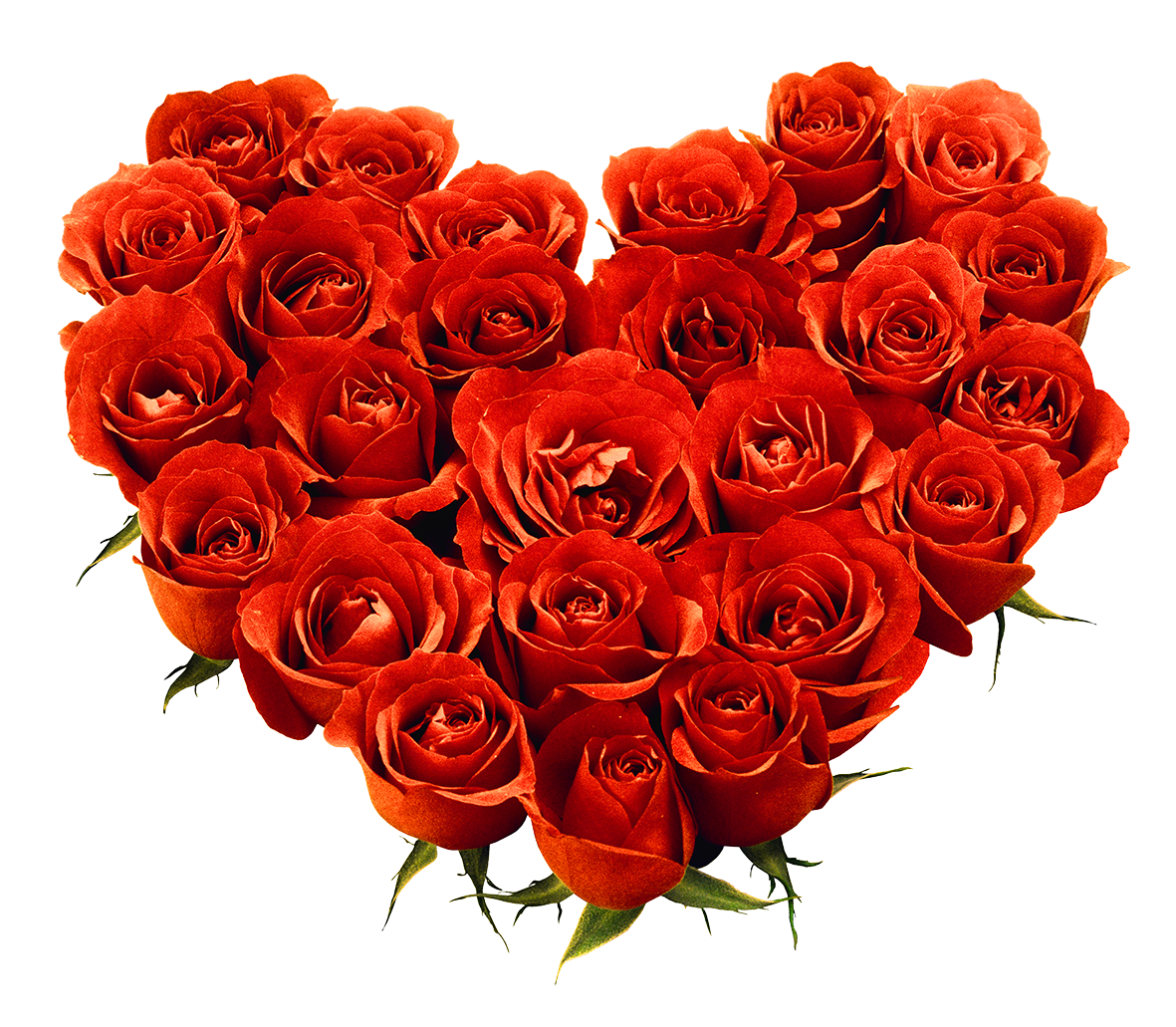 Rose Png Clipart Best