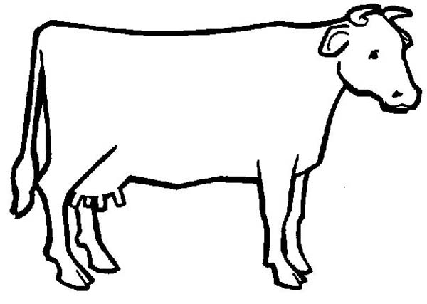 Cow Outline Coloring P...