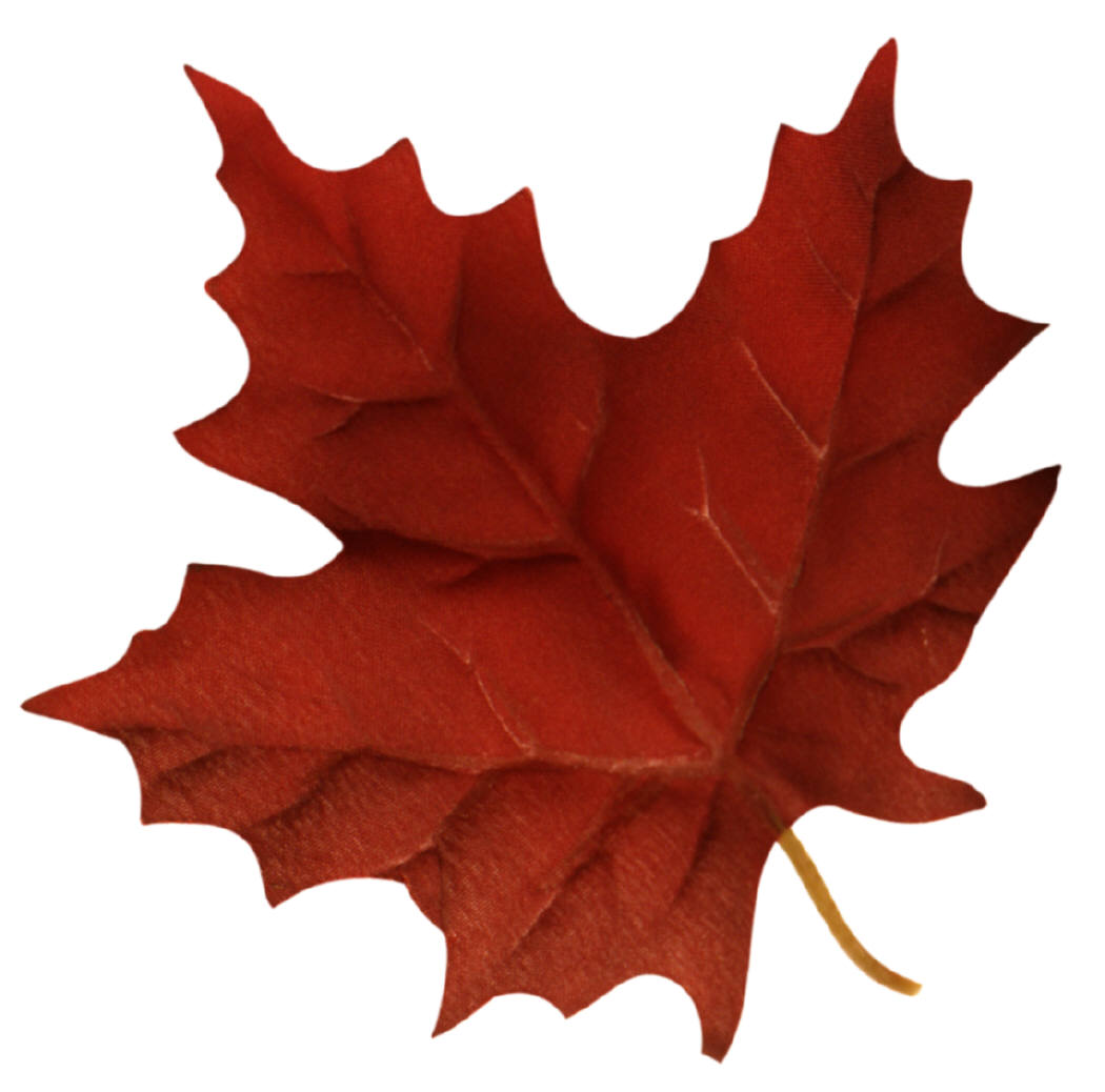 Canadian Maple Leaf Png - ClipArt Best